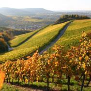 Napa Valley Wineries, California